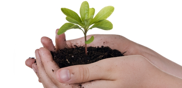 Hand holding a growing plant.